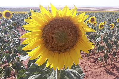fitosanitarios-portada_web